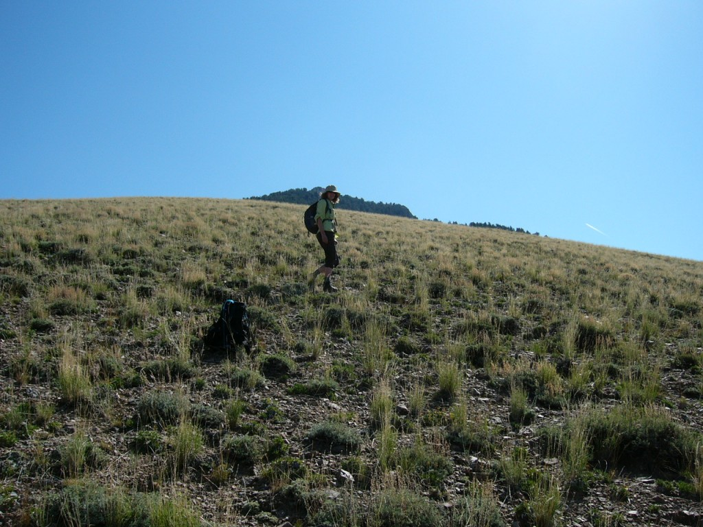 Climbing out of Fowler Springs to the climb of Nicholson Peak.