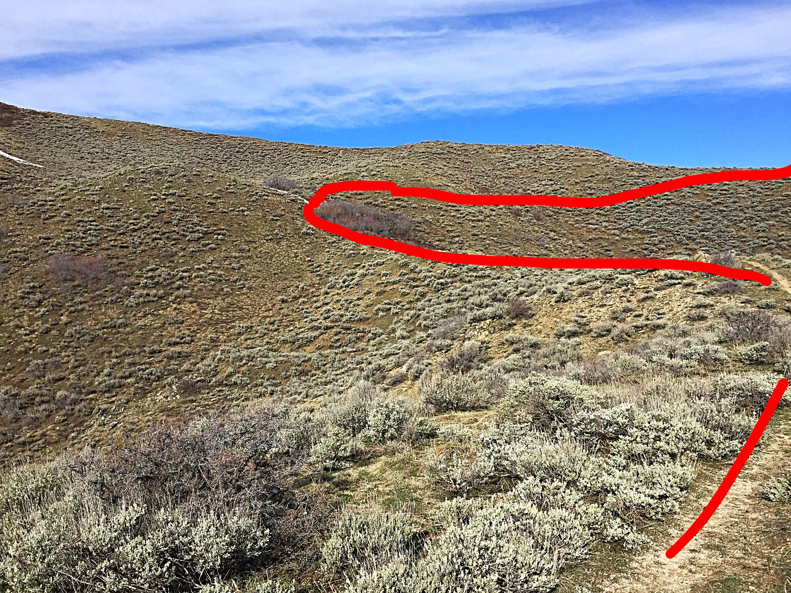 The red line shows the trail leading up to the grove of trees, and then the bypass leads across the ridge.
