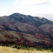 Peak 8037 as seen from Goodenough Peak. Photo - Steve Mandella.