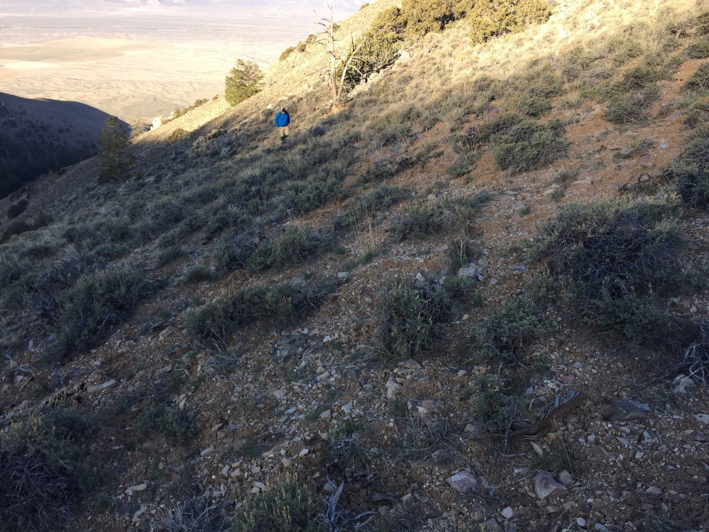 Following an elk trail up toward the ridge crest. Some of these game trails rival forest service trails but the have a nasty habit of ending in spots where the forage is thick enough to disperse the herd.