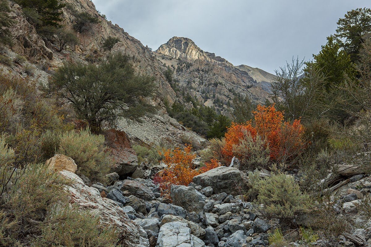The hike starts out by ascending the Pete Creek drainage. Photo - Larry Prescott