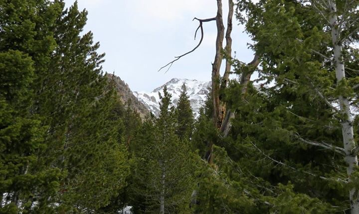 The summit is still a long way off when you first see it rising above the trees. Dan Paulson Photo