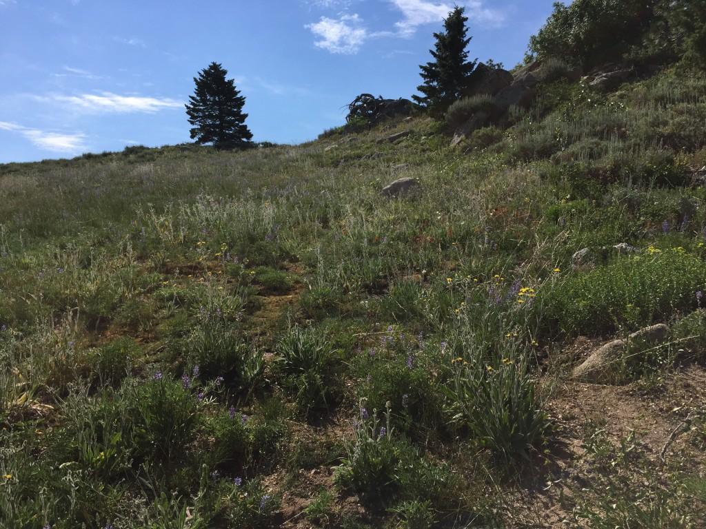 Elevation Gain Stone Mountain Hike : Mores mountain idaho a climbing guide