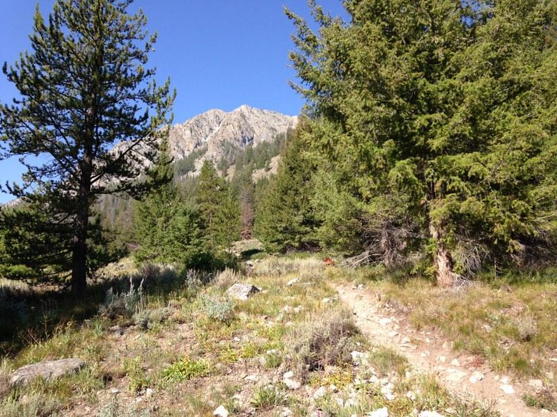 Like the road, the Prairie Creek trail is in good shape.