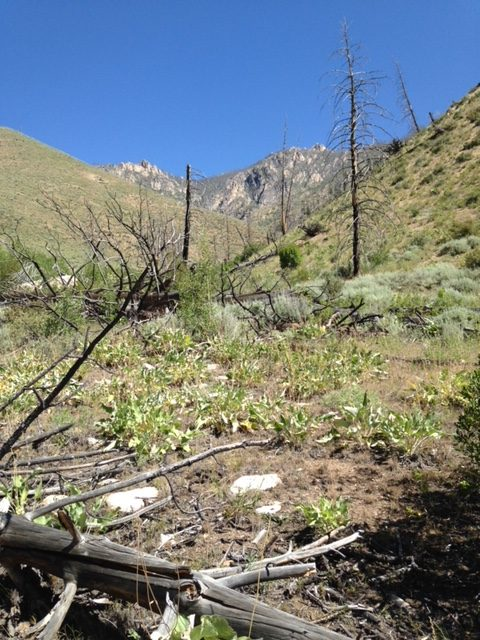 The walk up the valley to the campsite crossed exposed terrain recovering from a fire. Karen Jones Photo