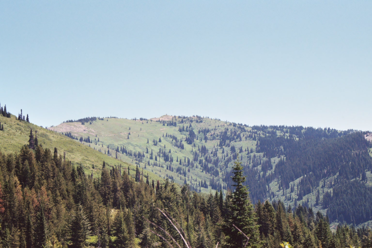 This is the high point of Coolwater Ridge, which is the westernmost high point of the Lochsa/Selway divide. Its not real high at 6,929 feet, but its got a respectable 1,129 feet of prominence and rises over a mile from the valley bottoms it divides. July 2007 Mike Hays Photo