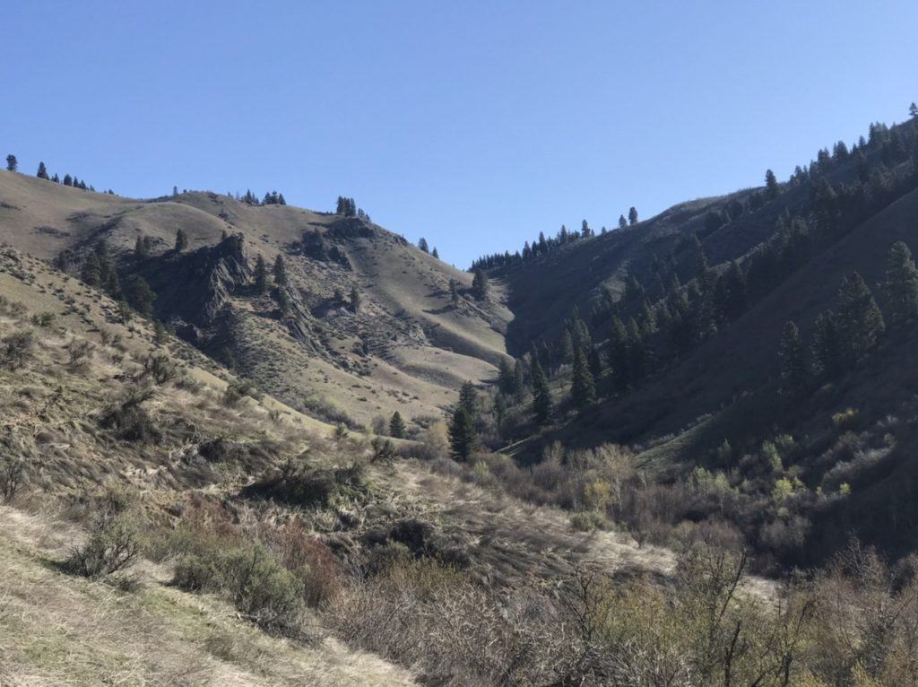 Looking up the Little Gallagher Creek drainage to the saddle. The game trails stay on the left hand, grassy slopes.