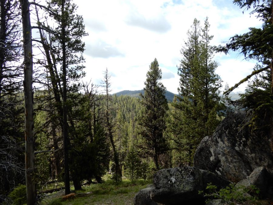 Ruby Mountain, behind the tree. John Platt Photo