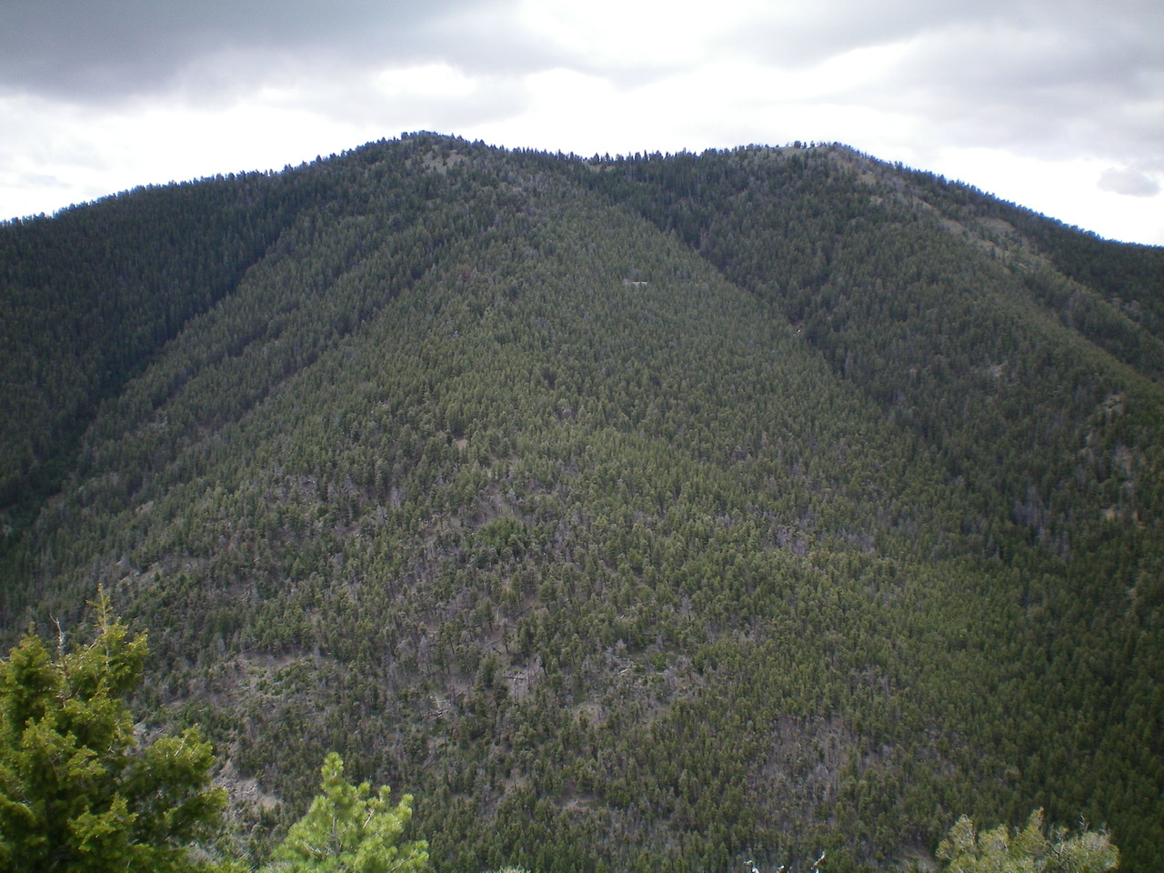 The thickly-forested North Face/Ridge of Peak 9300 as viewed from the summit of Peak 8365. The summit of Peak 9300 is the left hump. Livingston Douglas Photo