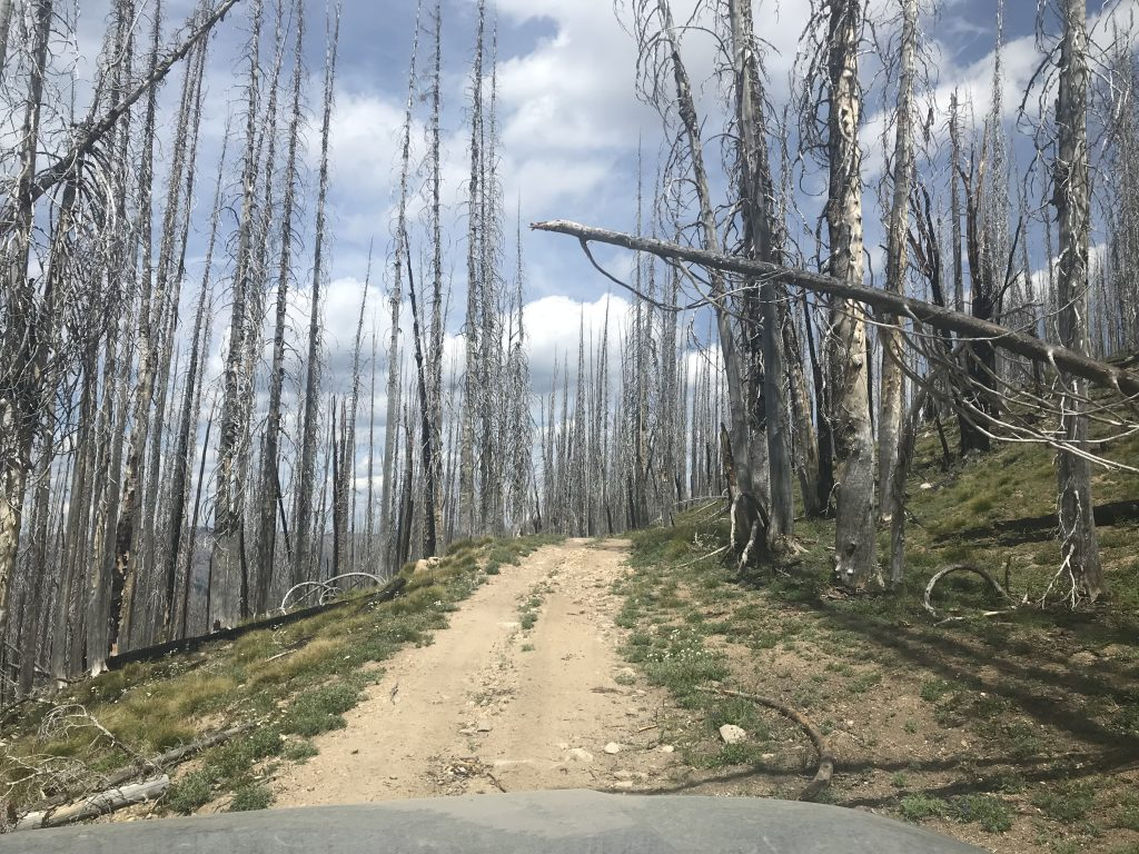 Deadfall is a constant threat along the route. There is no cell phone coverage. If your way out is blocked by fallen trees you will have to cut your way out.