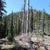 Peak 8300 viewed from Needles Summit. John Platt Photo
