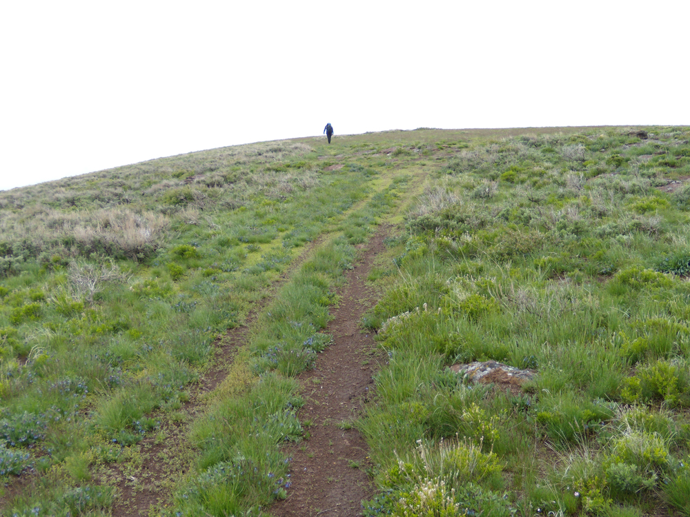 The two track leading from FS-671 to the summit of Monument Peak. John Platt Photo