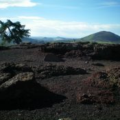 The summit area of Inferno Cone. Note the large lava boulders and nearby pine tree. Big Cinder Butte is in the background. Livingston Douglas Photo
