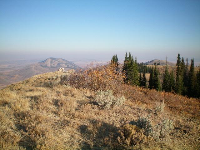 The brushy summit of Henry Peak, looking north. Livingston Douglas Photo