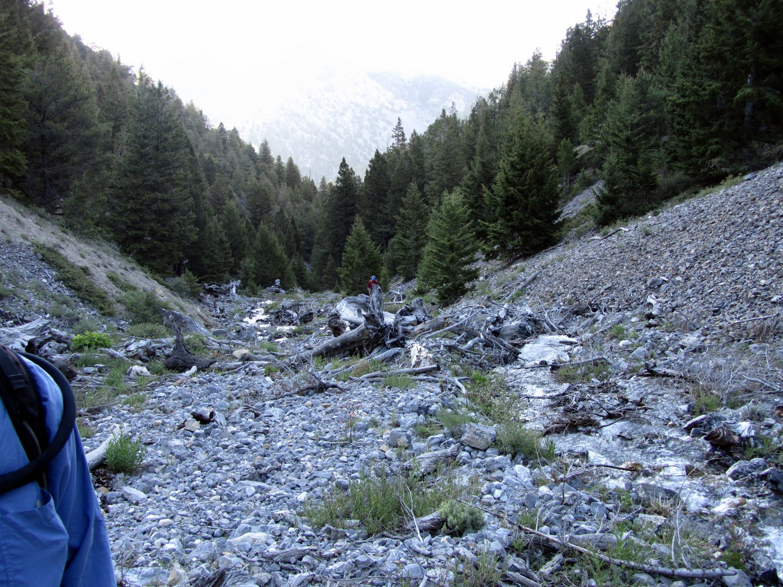 The route climbing up through the lower forest. George Reinier Photo