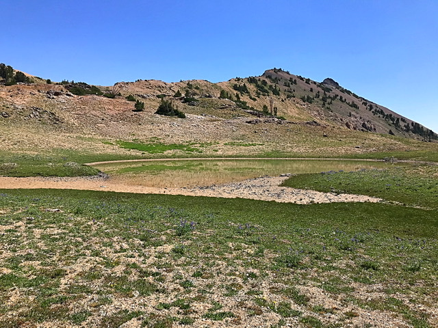 There are several small ponds in the uppermost reaches of the West Fork Trail Creek. This pond sits just below the saddle on Hemingway's east ridge.