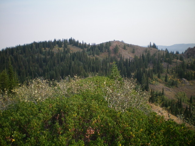 Red Butte (in mid-ground) as viewed from Prospect Peak to its south. The summit is the bare right hump. Livingston Douglas Photo