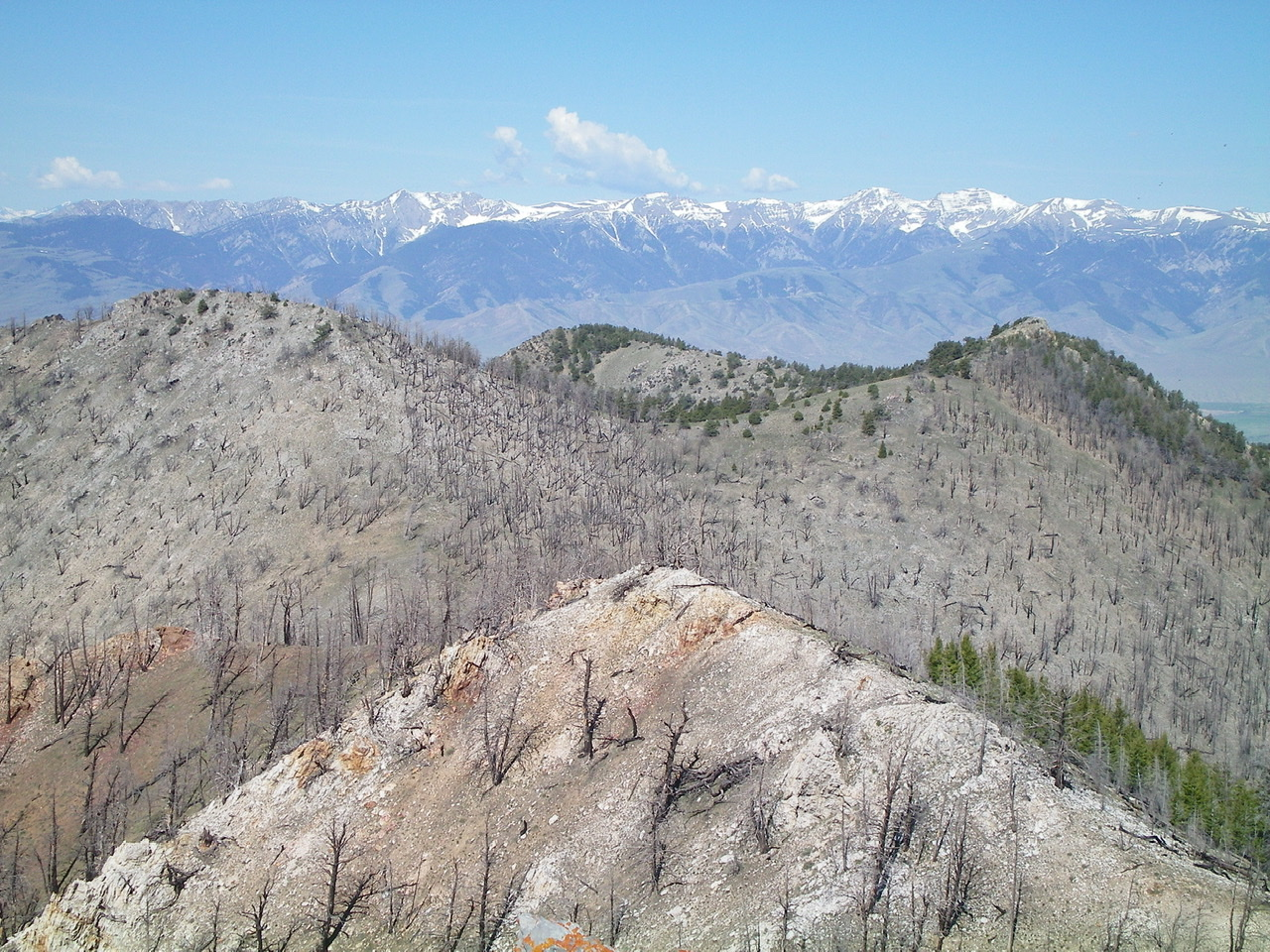 Burn-scarred Peak 9044 (the hump left of center) as viewed from Peak 9151 to the east. Livingston Douglas Photo