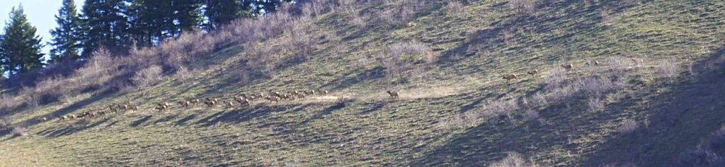 This area is prime elk habitat. On my climb we spotted over 200 elk running toward the saddle. Gilbert Gallegos Photo