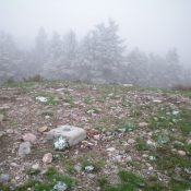 The summit area of Picnic Benchmark with freshly snow-dusted pines nearby. Livingston Douglas Photo