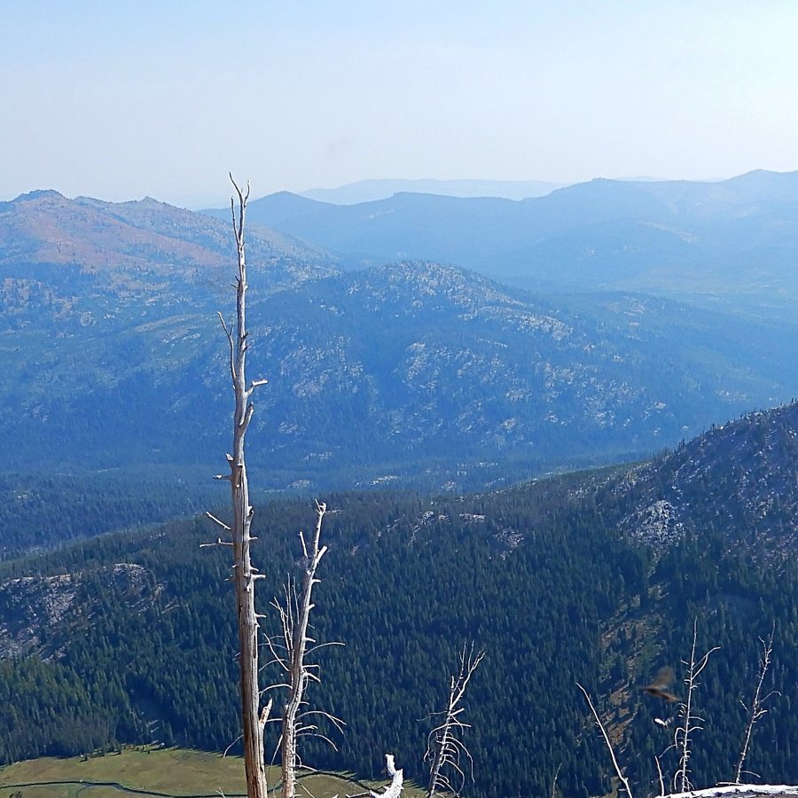 Peak 7365 viewed from the south. John Platt Photo