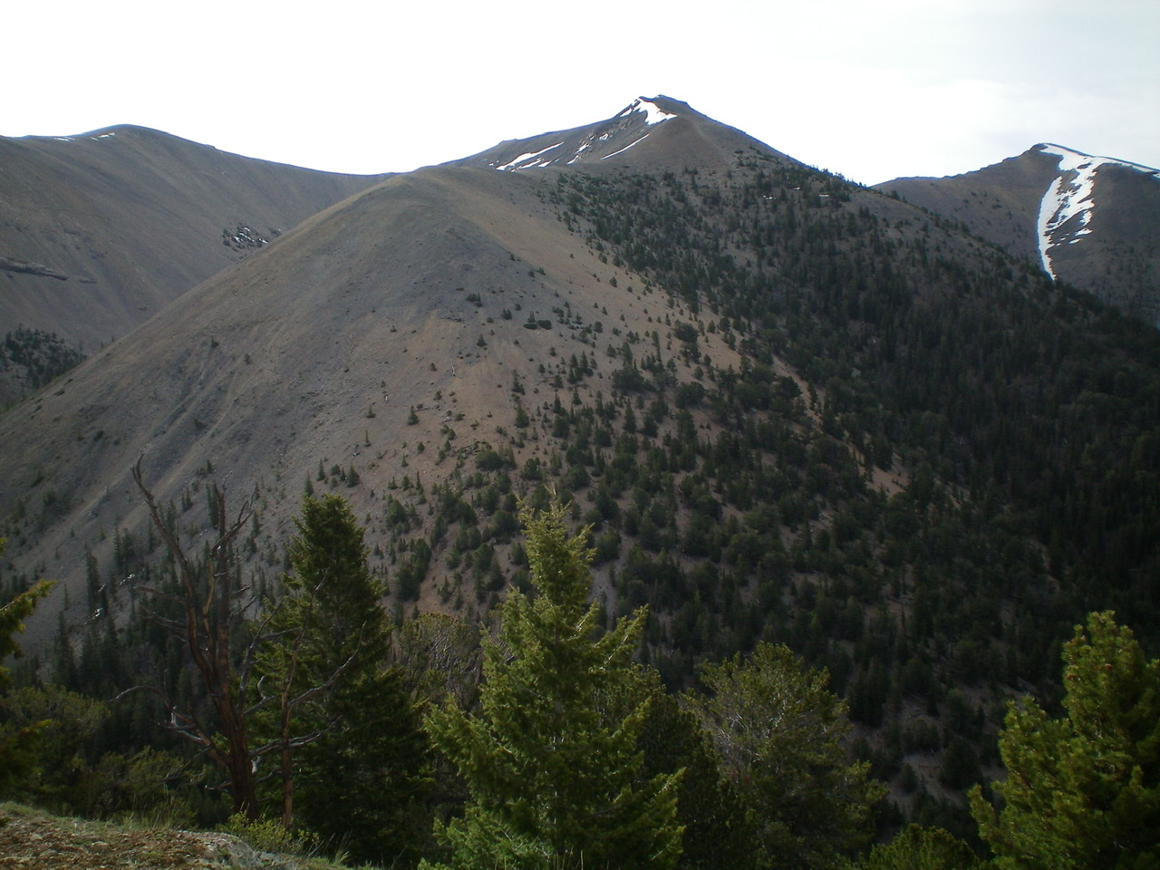 Midway Mountain (summit is just right of center) and the Northwest Ridge coming straight at the camera and descending steeply to Cedar Run Canyon. View is from a ridge on the west side of Cedar Run Canyon. Livingston Douglas Photo