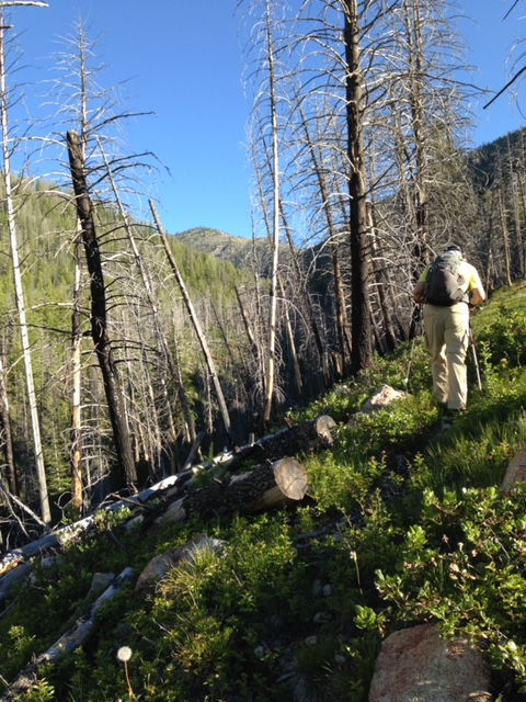 The second morning, starting up the trail to our summit. Karen Jones Photo