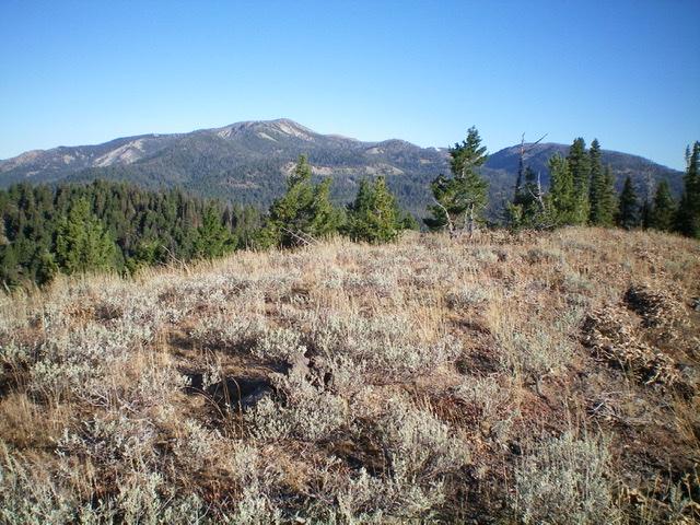The summit area of Dry Creek Peak. Livingston Douglas Photo