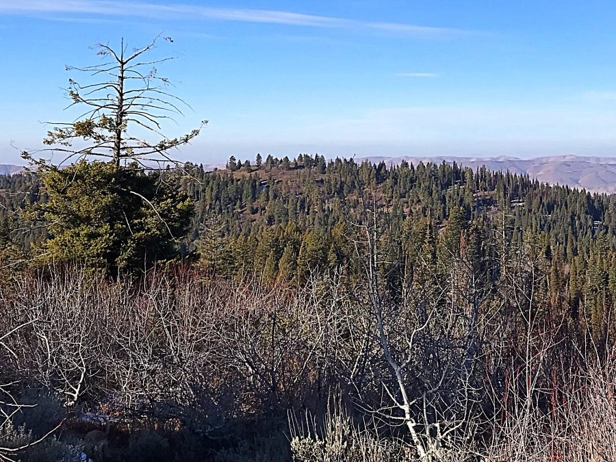 Peak 6340 viewed from Dry Buck Mountain.