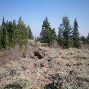 The summit high point of Sheep Mountain. Livingston Douglas Photo