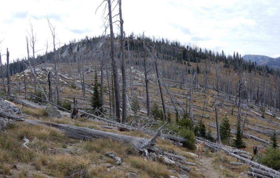 Toller Peak. John Platt Photo