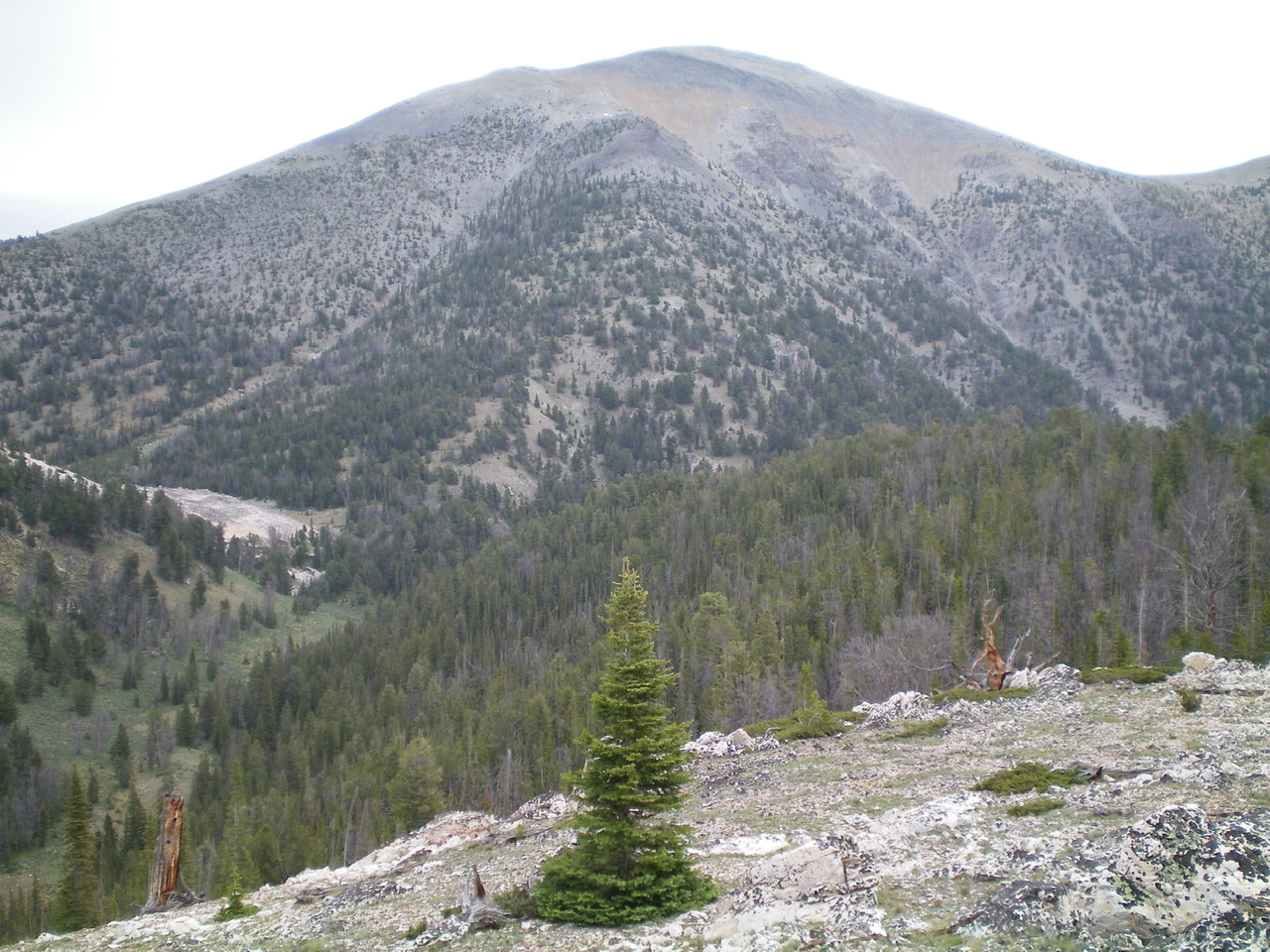 The upper Southeast Ridge (dead-center and forested) of Sheep Mountain, as viewed from the Northeast Ridge of Peak 9188. Higher up, it jogs L then jogs R to reach the summit area. Livingston Douglas Photo