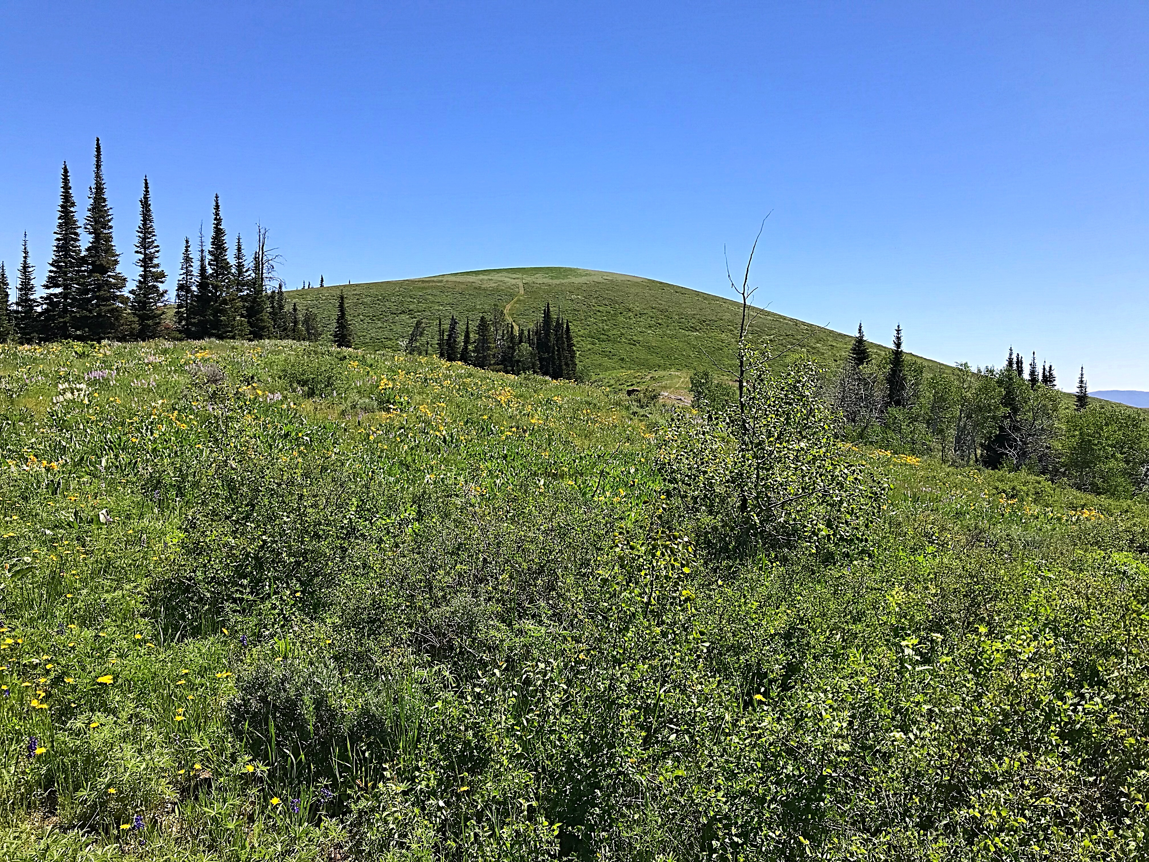 Trapper Peak's west face. The seldom used ATV track to the summit is visible.