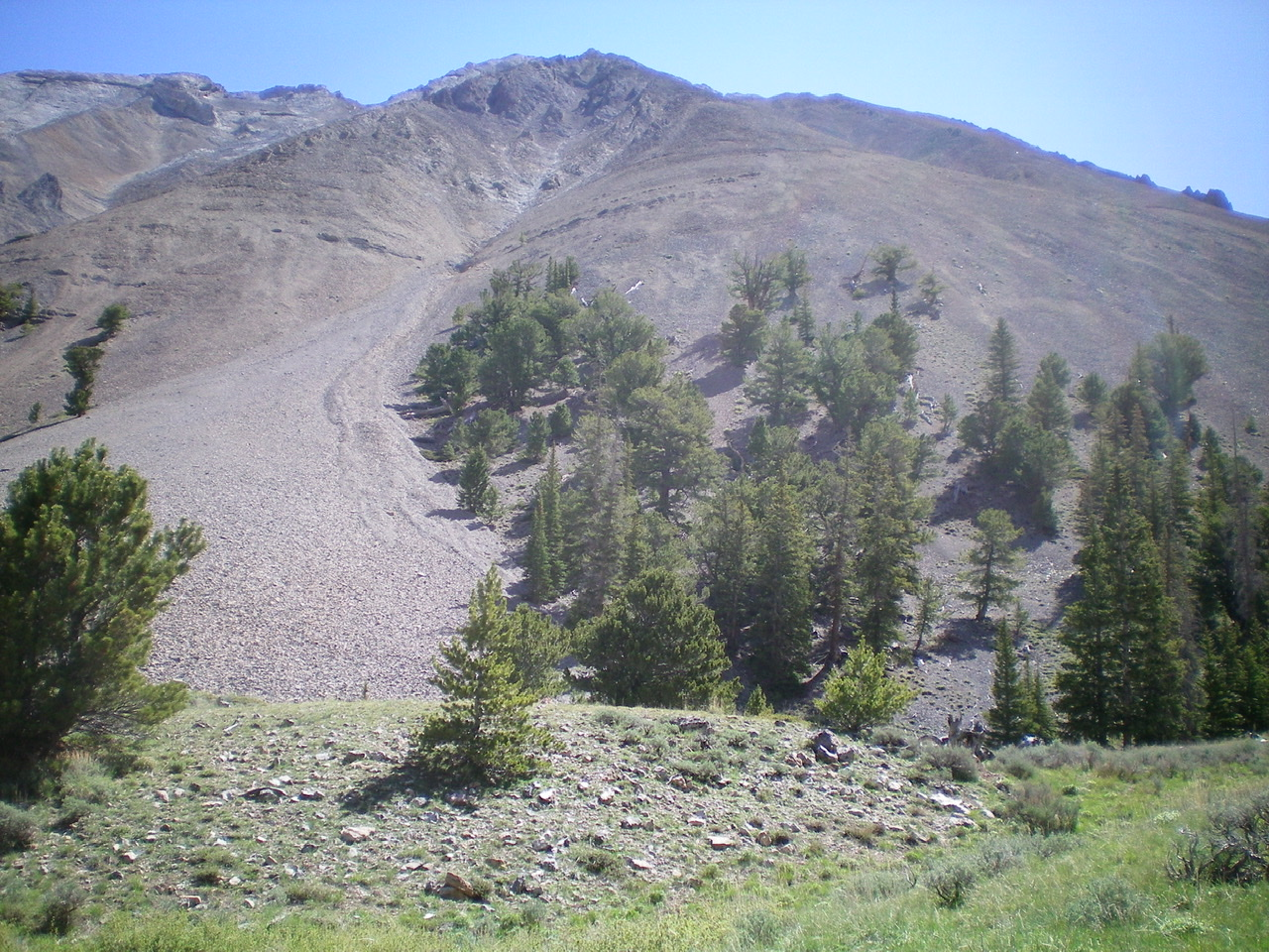 The West Gully (center of photo) and West Shoulder (has trees on its lower section) of Black and White Peak. The West Ridge is on the left side of the gully. The West Shoulder is on the right side of the gully. The ascent route begins left of the trees in the center of the gully then moves rightward onto the shoulder higher up. The shoulder then bends left-ish to join the West Ridge high up. Livingston Douglas Photo