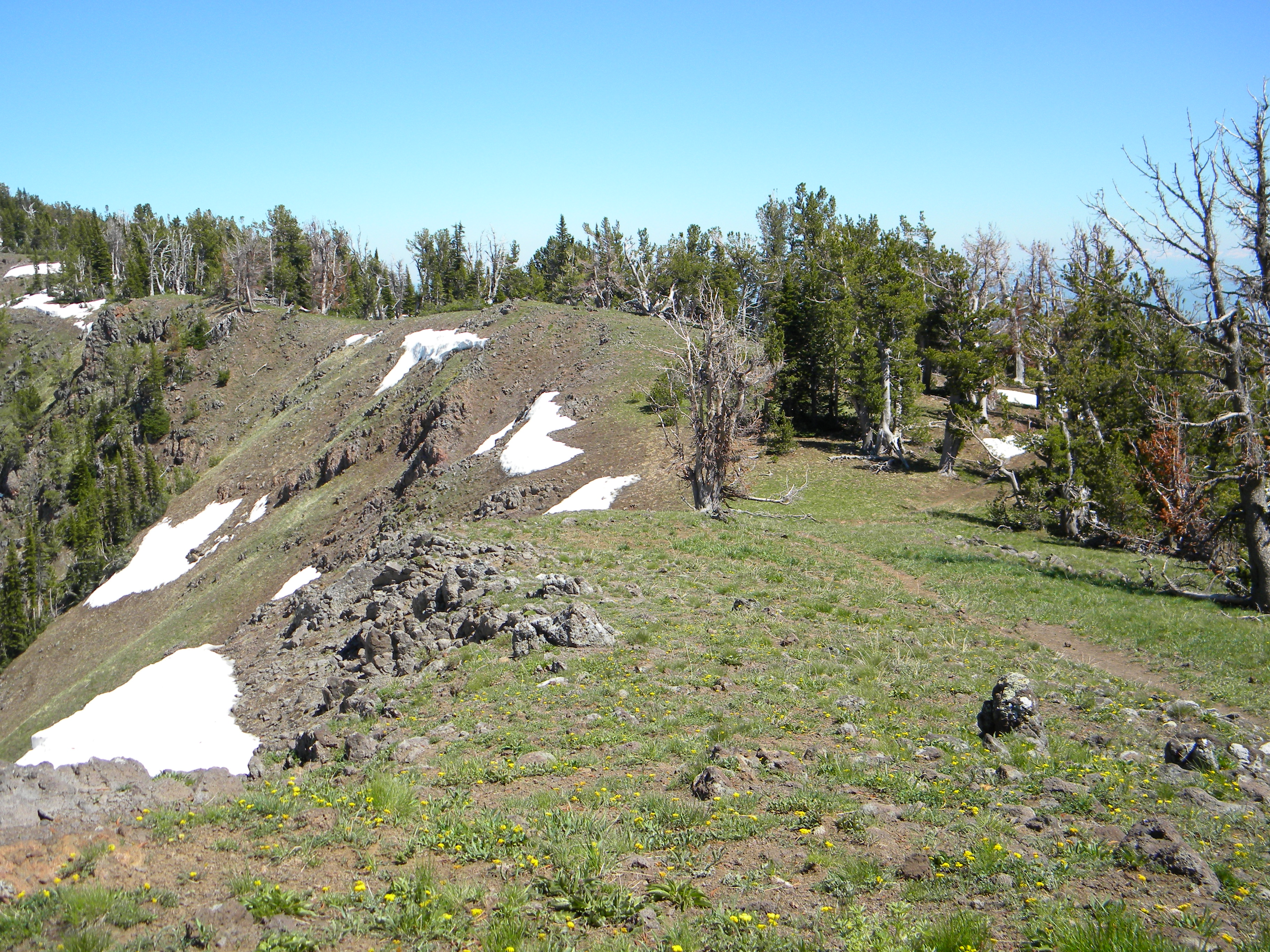 This is the trail along the ridge line about a mile in from the trailhead. June 2009 Mike Hays Photo