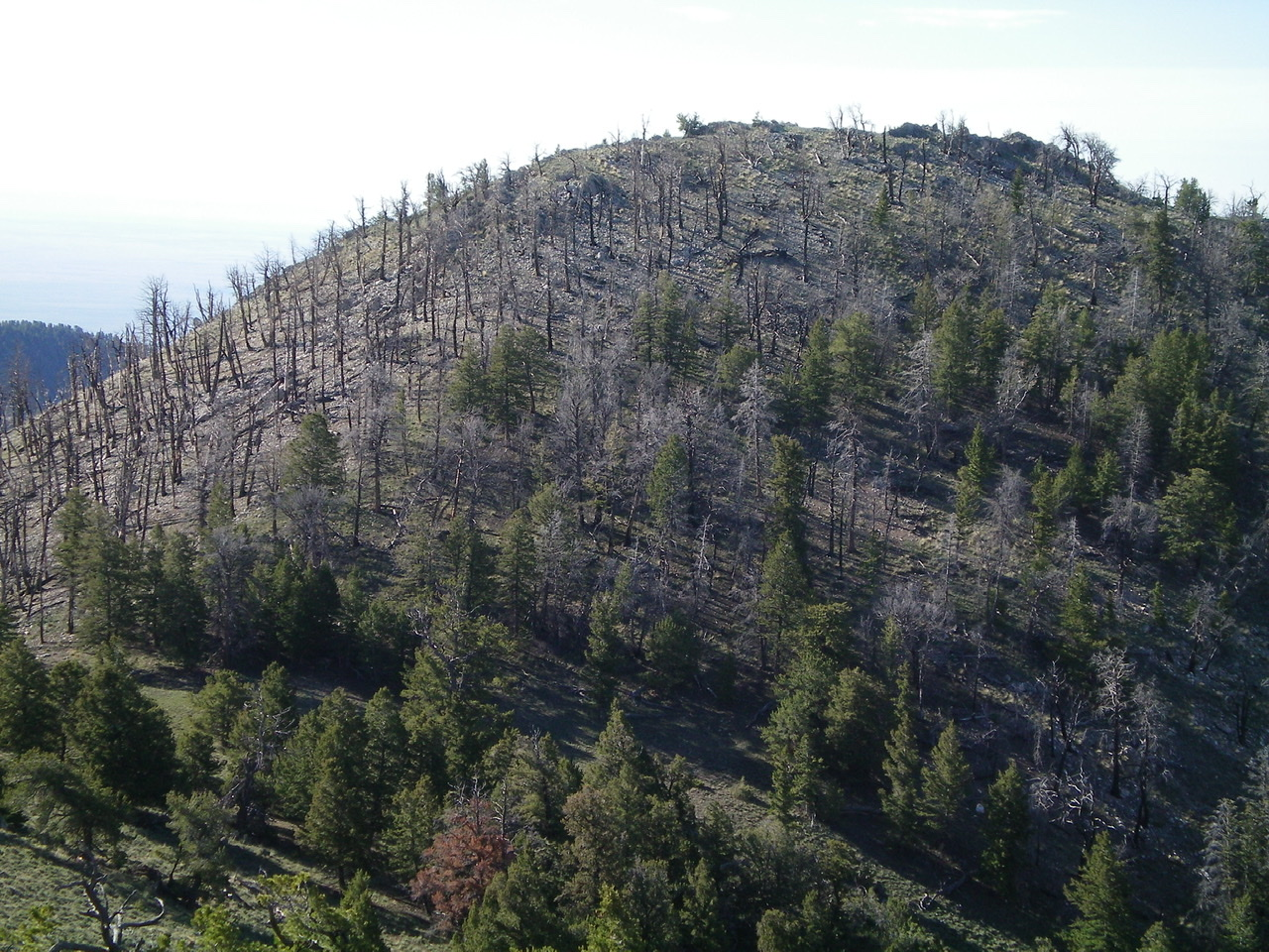 Looking south at burn-scarred Peak 9044 from Point 9004. Livingston Douglas Photo