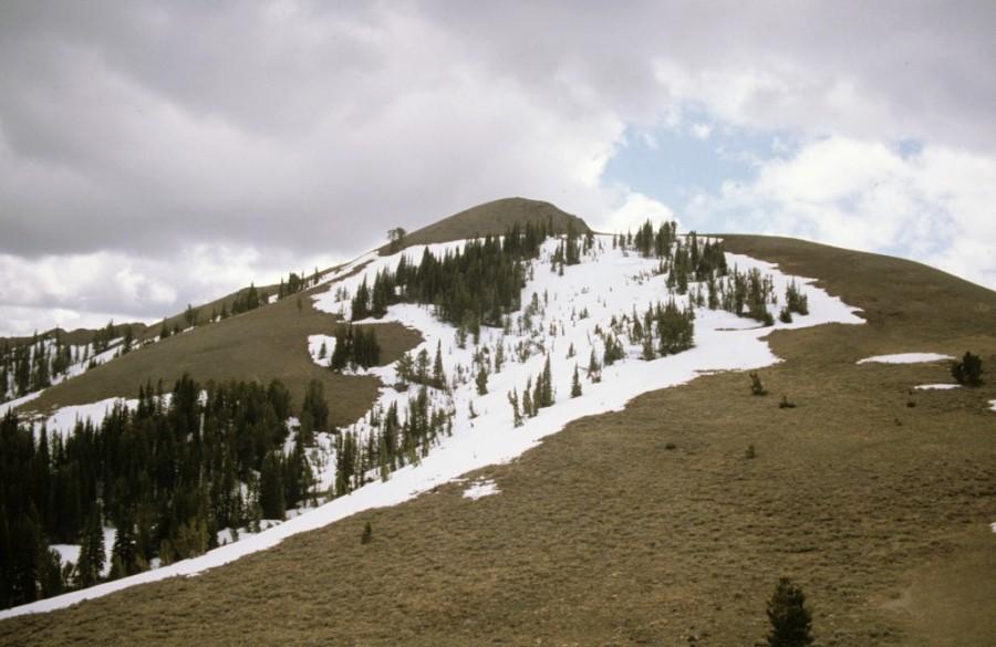 Buttercup Mountain.