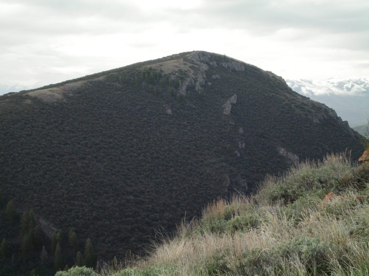 The rugged, thickly-forested NW Face of Peak 8454 as viewed from the East Spur of Peak 8923. The left skyline is a profile of the North Ridge. The snow-capped Lost River Range is in the background right. Livingston Douglas Photo
