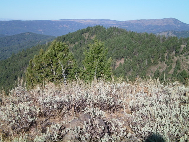 Point 8200+ (forested hump in center) is the [lower] east summit of Dry Creek Peak. This shot is taken from the true/east summit of Dry Creek Peak to its east. Livingston Douglas Photo