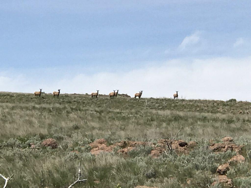 Ten Elk.