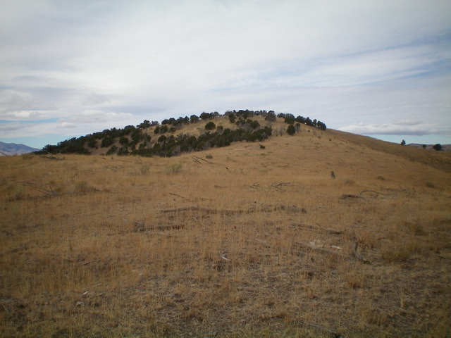The juniper-clad summit hump of Peak 5610. Livingston Douglas Photo