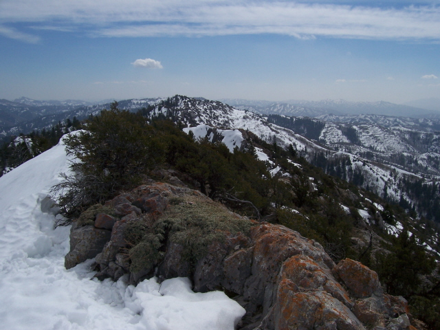 From The summit of Cedar Creek Peak the view is SE to ridgepoint 7443'. To the left, 7 miles distant is the Sublett Range highpoint Roy Peak 7492'