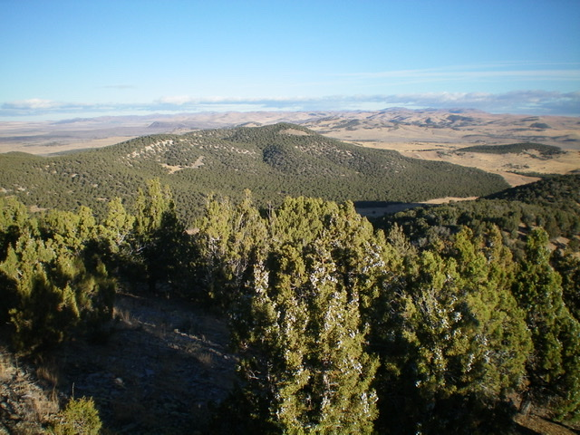 Peak 5550 (center, thickly forested) as viewed from near the summit of Stone Hills HP to the south-southeast. Livingston Douglas Photo