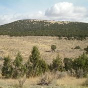 Peak 5641 is a flat-ridged summit, as viewed from the parking area on FSR-049 to its southwest. The summit high point is at the left/northwest end of the juniper-clad summit plateau. Livingston Douglas Photo