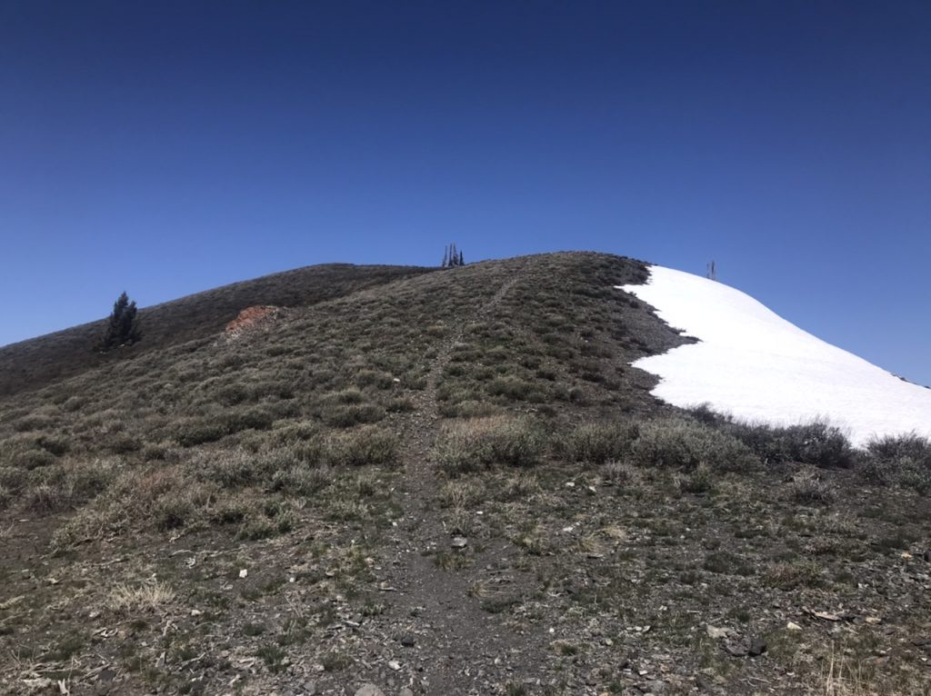 The final stretch to the summit follows this unofficial trail.