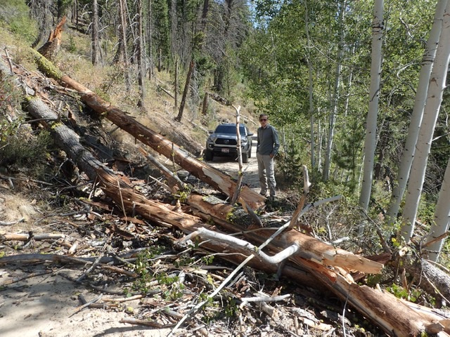 "Judi Steciak reports this ""picture is the worst of the deadfall that we cleared off the road."" Judi Steciak Photo"