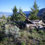 The summit area of Peak 8835. Livingston Douglas Photo