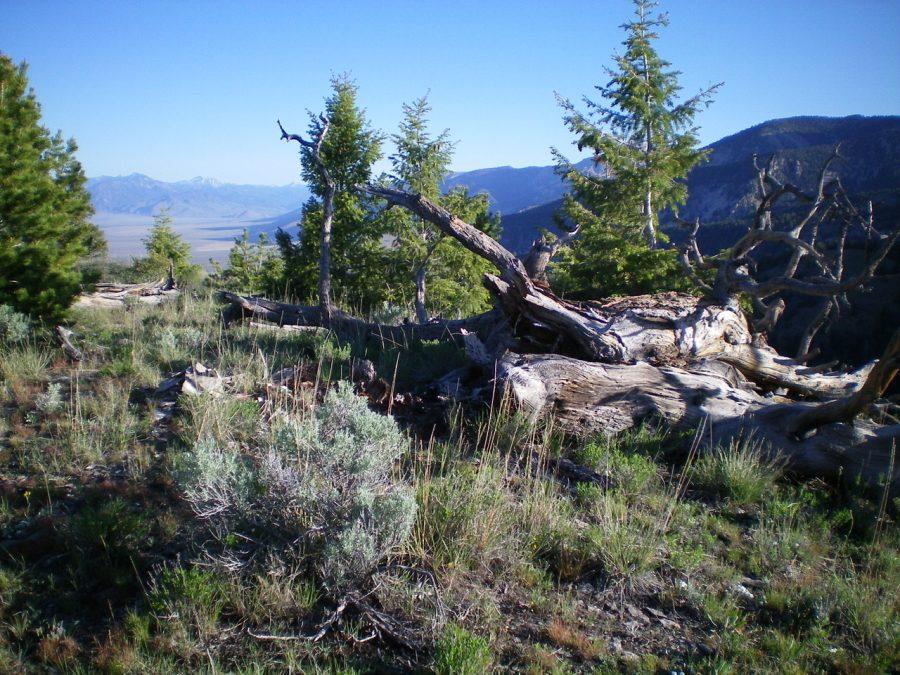 The summit area of Peak 8835. Livingston Douglas Photo