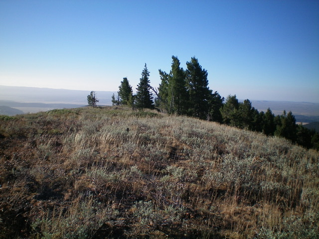 Another view of the summit area of Dry Creek Peak. Livingston Douglas Photo