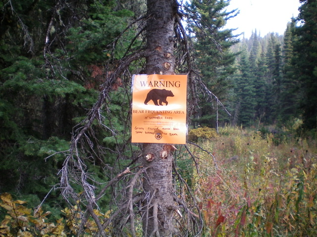 Grizzlies roam the Twin Creek drainage at the base of the west ridge of Mount Two Top. Be alert and carry bear spray. Livingston Douglas Photo